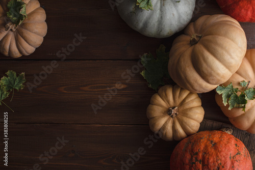Fototapeta Thanksgiving background: Apples, pumpkins and fallen leaves on a wooden background. Copy space for text. Halloween, Thanksgiving, or seasonal fall. Design layout. Horizontal obraz