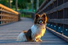 Dog On Bridge, Papillion