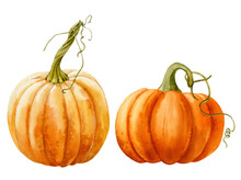 Watercolor Illustration. Set Of Two Bright Orange Ripe Pumpkins With A Twig.