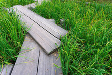 A Wooden Path On The Green Grass Of A Reservoir Or Swamp. Design Of Paths And Bridges In Japanese And Asian Styles.