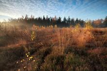 Morning Sunlight Over Marsh Wi...