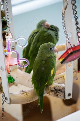 Fotografie, Obraz bird trio