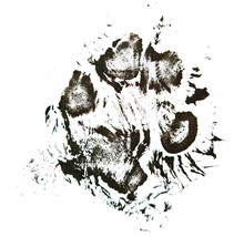 A Print Of A Dog Paw. A Real A...