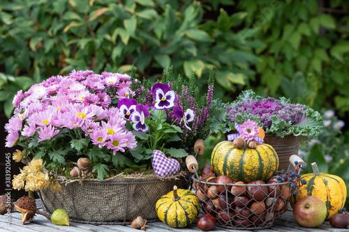 Herbst-Gartendekoration mit Kürbissen, lila Blumen und Nüssen