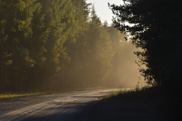 Road in foggy morning