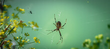 Spider On The Web, Wit A Green...