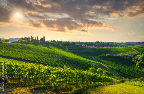 Naklejka premium Panoramic view of chianti and vernaccia vineyards. San Gimignano. Tuscany, Italy