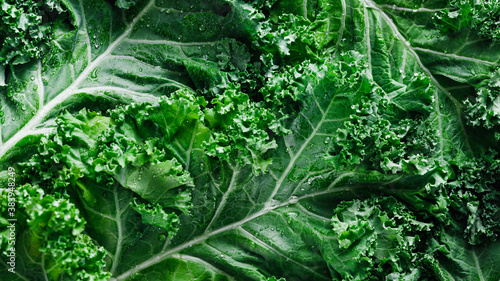 Photo Top view of fresh curly kale salad, food background, macro photography