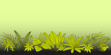 Gradient Border Background With Tropical Epiphytes