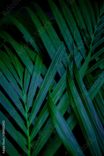 tropical green palm leaf and shadow, abstract natural background, dark tone