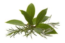 Fresh Herbs. Rosemary, Lavender And Bay Leaf