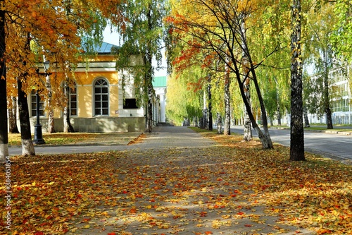 Photo City boulevard with autumn trees and fallen leaves