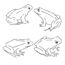 Outline Drawing Of A Frog Isolated On White, Frog, Vector Sketch Illustration
