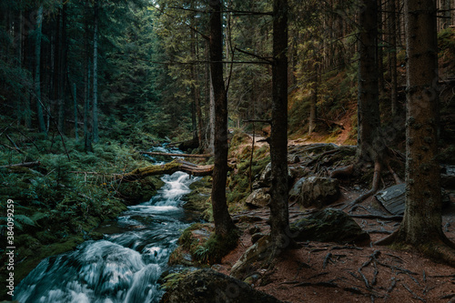 Cold moutain forest wilderness with wild stream in evenning light.