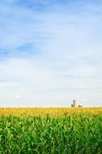 Corn Field With Silos