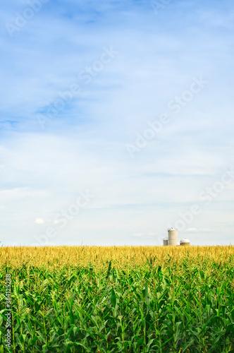 Corn field with silos Fototapet