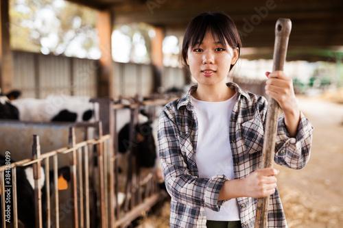 Female farmer who is feeding beasts at the cow farm Fototapeta
