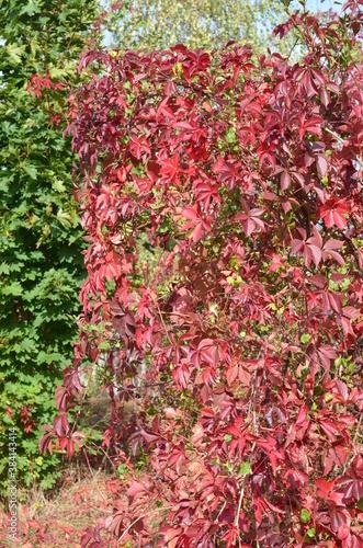 natura jesienią , na  obraz , na fototapetę , na naklejkę , obraz kolory jesieni , Polska jesień , kolorowa Polska jesień , wzór na płytki , wzór na tapetę , na tapetę ,kolory jesieni Polska