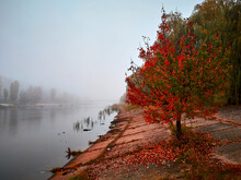 Autumn Tree With Red Leaves Stands On The Banks Of A Water Canal. In The Valley, Everything Is Blurred By Fog. Trees Grow On The Opposite Bank Of The River.