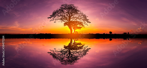 Fototapeta Panorama silhouette tree in africa with sunset.Tree silhouetted against a setting sun reflection on water.Typical african sunset with acacia trees in Masai Mara, Kenya. obraz