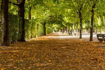 Avenue in Augarten Park in Vienna (Austria) on a nice sunny autumn day