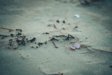 Open Pink Shell Of Sea Snail L...