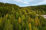 Fototapeta Na ścianę - Aerial top view of green, yellow forest and blue sky. Autumn. Karelia, Russia