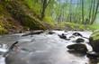 Potok płynący w lesie