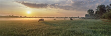 Panorama Of Grazing Cows In A ...