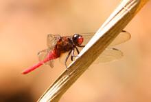 Dragonfly On A Leaf
