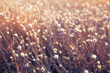Dry Wild Flowers Background In...