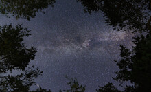 Milky Way Above Trees. Look Up...