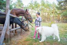 In Summer, On The Farm, A Girl...