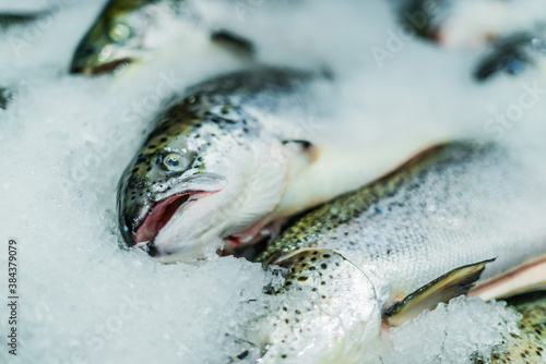 Fish put up for sale at a supermarket stall Canvas