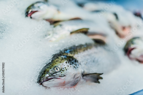 Foto Fish put up for sale at a supermarket stall