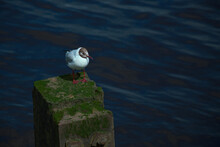 A Seagull Sitting On A Wooden ...