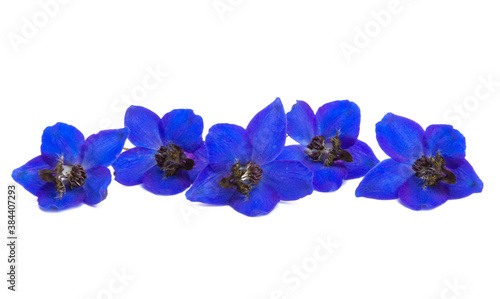 Fotografija blue delphinium flowers isolated