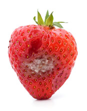 One Rotten Strawberry.