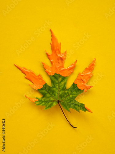 Canvas Print Green maple leaf with soft orange acrylic's color on yellow background