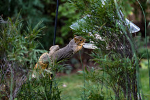 Active Squirrel Scouting For F...