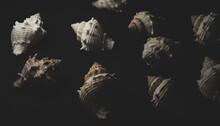 Snail Seashell Macro Close Up