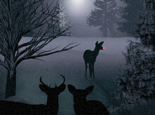 Wild Deer Are Seen At Night In...