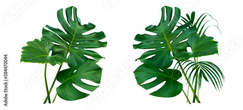 Fototapeta Monstera and Fern plant leaves, the tropical evergreen vine isolated on white background,clipping path.  obraz