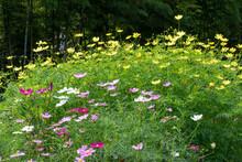 美しい秋の花