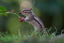 Cutest Squirrel Smelling A Flo...
