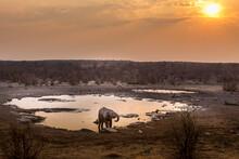 Elephants Near A Waterhole In ...