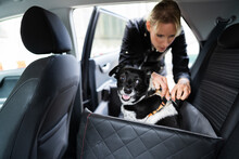 Woman Fastening Dog In Car With Safe Belt