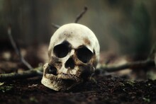 Decaying Skull In The Soil