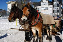 Winterliche Pferdeschlittenfahrt In Oberhof, Thüringen, Deutschland, Europa  --   Horse Drawn Sleigh Rides, Oberhof, Thueringia, Germany