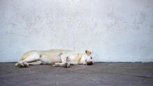Big Homeless Beige Color Dog S...